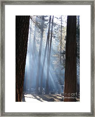 Campfire Smoke Through The Trees Framed Print