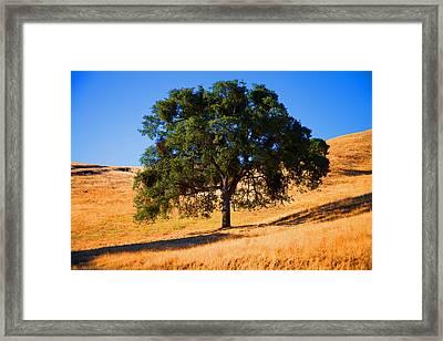 Campo Seco Tree Framed Print by Joe Fernandez