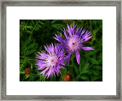 Framed Print featuring the photograph Can Flowers Say Boo by Steve Taylor