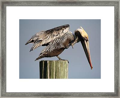 Can You Hear Me Now Framed Print by Paulette Thomas