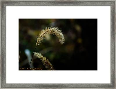 Can You Help Me I'm Bent Framed Print by Dan Crosby