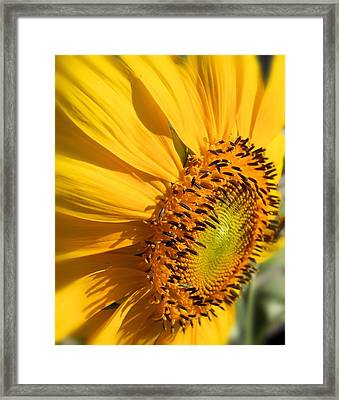 Framed Print featuring the photograph Can You Say Sunshine by Lynnette Johns