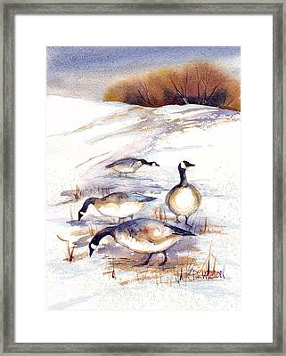 Canada Geese In Stubble Field Framed Print by Peggy Wilson