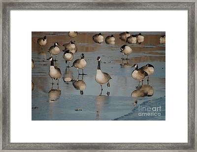 Framed Print featuring the photograph Canada Geese by Mark McReynolds