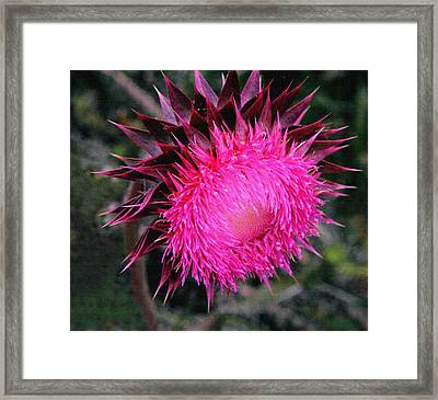 Framed Print featuring the photograph Canada Thistle by Robert Kernodle