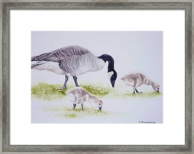 Canadian Aliens Framed Print by Claudia Rutherford