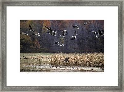 Framed Print featuring the photograph Canadian Geese In Flight by Craig Lovell