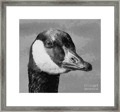 Canadian Goose Framed Print by Elizabeth Coats