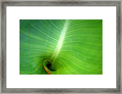Canalilly Ear Framed Print