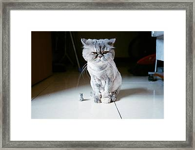 Candy And Little Candy Framed Print