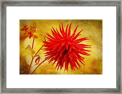Candy Apple Framed Print