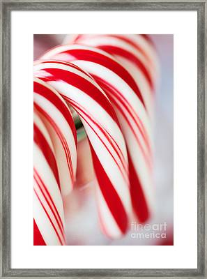 Candy Canes Framed Print by Kim Fearheiley