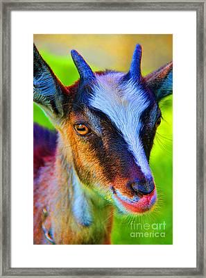 Candy Goat Framed Print by Mariola Bitner