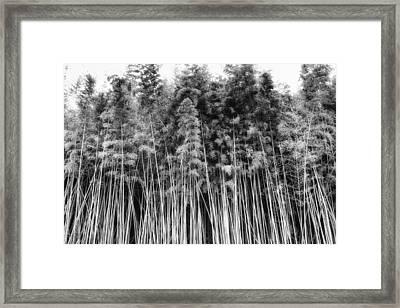 Canes At Canebrake Framed Print