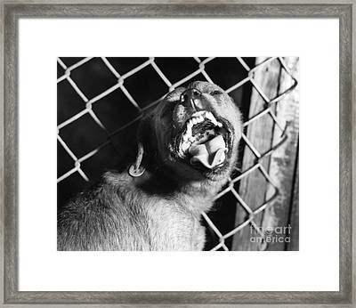 Canine Rabies Suspect Framed Print by Science Source