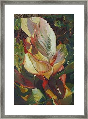Canna In Light Framed Print by Elizabeth Taft