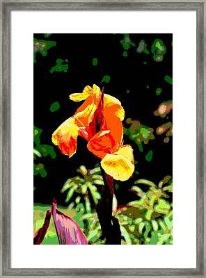 Canna In Summer Framed Print by Dorrie Pelzer