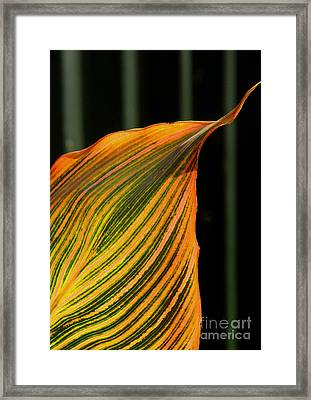 Framed Print featuring the photograph Canna Leaf by Nareeta Martin