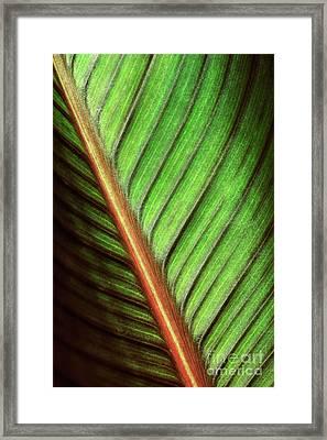 Canna Leaf Framed Print by Neil Overy