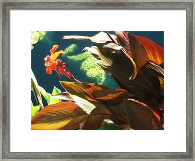 Canna Lily And Water In San Angelo Civic League Park Framed Print by Louis Nugent