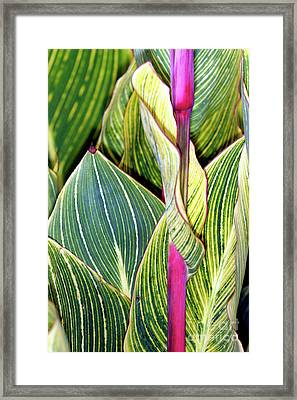 Canna Lily Foliage Framed Print by Dr Keith Wheeler