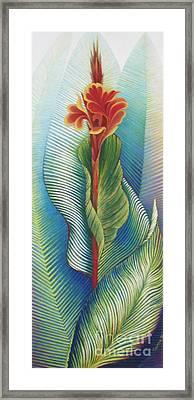 Canna Striata Framed Print