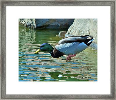 Framed Print featuring the photograph Cannonball by Stephen  Johnson