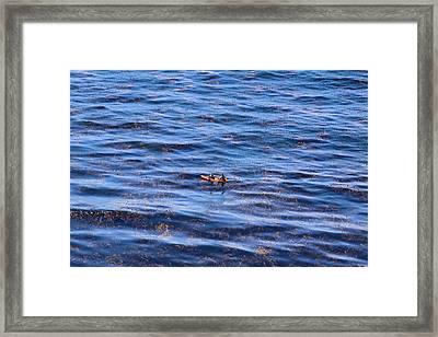 Canoeing Framed Print by Viktor Savchenko
