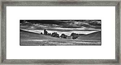 Canola Among The Wheat IIi Framed Print
