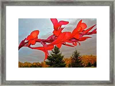 Canopy Of Color Framed Print by Randy Rosenberger