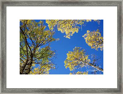 Canopy Framed Print by Vicki Pelham