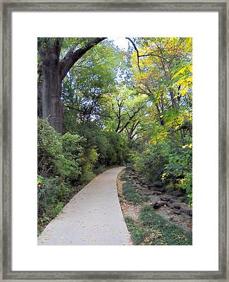Framed Print featuring the photograph Canopy Walkway by Lynnette Johns
