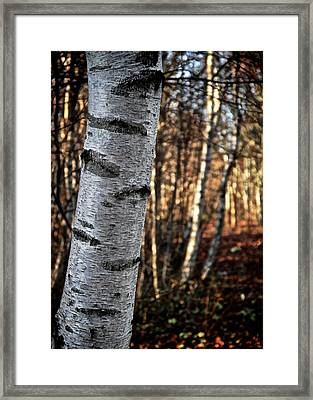 Can't See The Forest For The Tree Framed Print by Odd Jeppesen