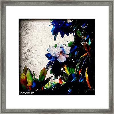 Canvas Magnolia Framed Print
