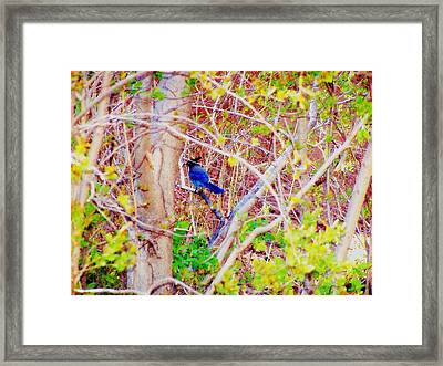 Framed Print featuring the photograph Canyon Jay Too by Clarice  Lakota