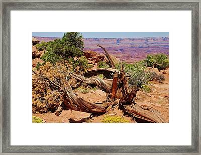 Framed Print featuring the photograph Canyonlands 2 by Dany Lison