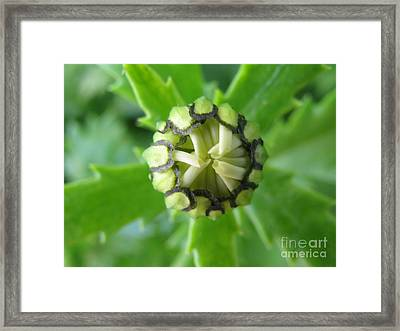 Framed Print featuring the photograph Capable by Tina Marie