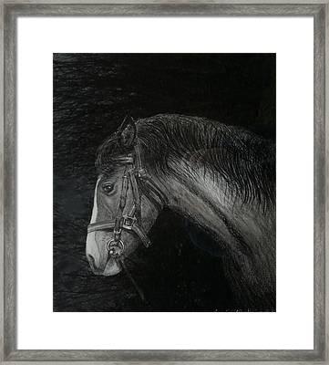 Capall Doracha Framed Print by Tomas OMaoldomhnaigh