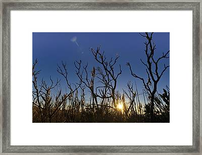 Cape Cod Marsh At Sunset Framed Print by Marianne Campolongo