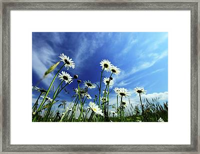 Cape Cod Summer Framed Print