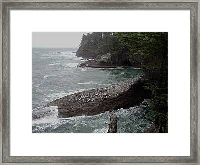 Cape Flattery Shoreline Framed Print by Fred Russell
