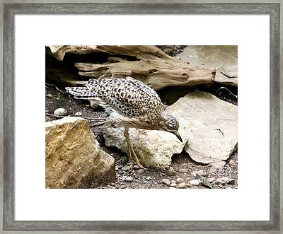 Cape Thick Knee Framed Print by Jack R Brock
