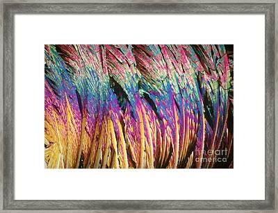 Capsaicin Framed Print