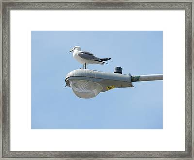 Captain And Craft Framed Print by Dennis Leatherman