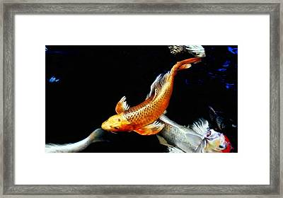 Captain Koi Framed Print