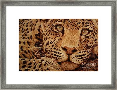 Captivated Framed Print by Steven Hawkes