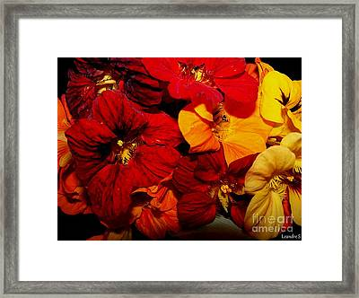 Framed Print featuring the photograph Capucines by Sylvie Leandre