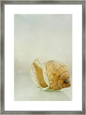 Caracola 2 Framed Print