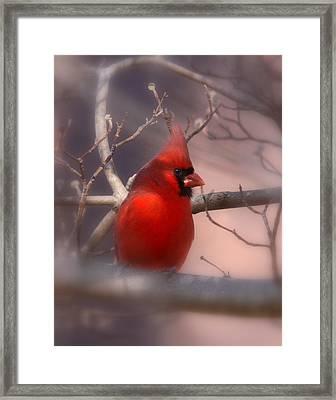 Cardinal - Unafraid Framed Print