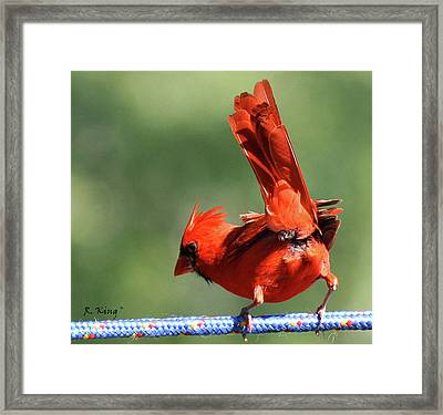 Cardinal-a Picture Is Worth A Thousand Words Framed Print